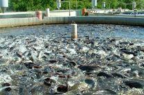 تلف شدن 243 قطعه ماهی در آمل