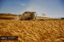 پیش بینی خرید 9 میلیون تن گندم در سال 98