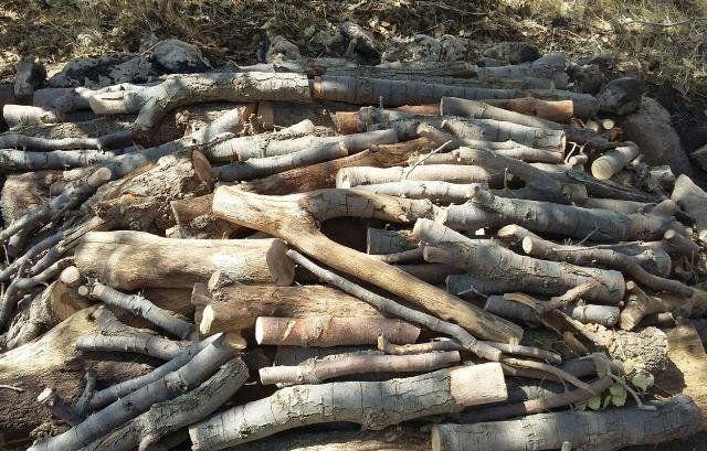 کشف 5 تن چوب بلوط  قاچاق در فلاورجان
