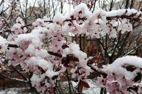 سرمازدگی بیش از ۸ هزار میلیارد تومان به کشاورزان استان خسارت زد
