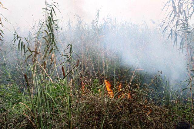 مهار مجدد آتش سوزی نیزارهای تالاب شادگان