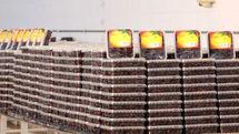ذخیرهسازی بیش از ۳ هزار تن خرما در سردخانههای هرمزگان
