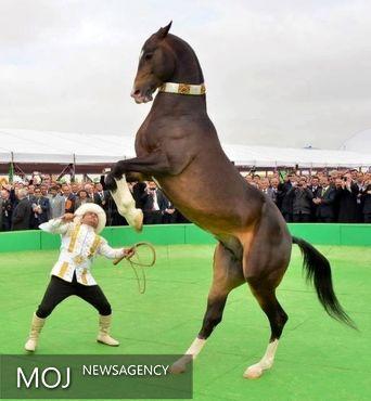 جشنواره بزرگ اسب ترکمن با حضور داوران بین المللی برپا می شود