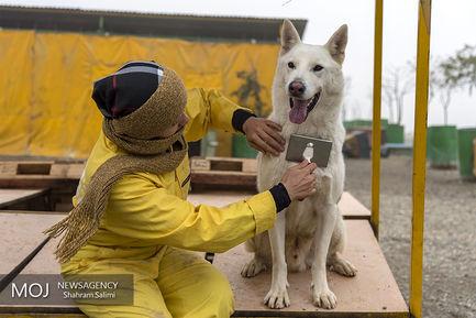 پناهگاه سگ های ولگرد در مرکز وفا