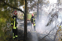 ۱۷ مورد عملیات اطفای آتش و پیشگیری از بروز حوادث از سوی آتش نشانی رشت
