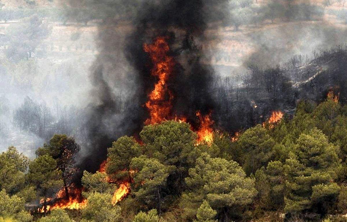 آتش سوزی در جنگل آمل