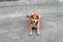 شهرداری تهران اقدام به کشتار سگها نکرده است