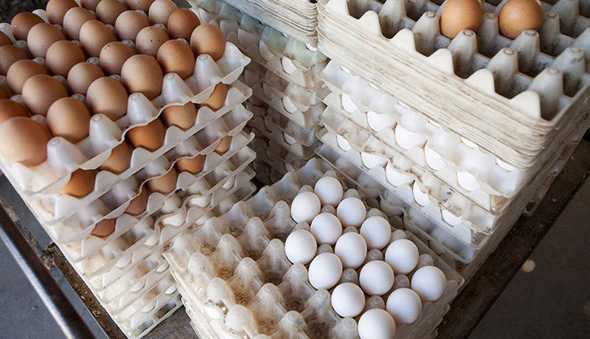 دلیل قیمت تخم مرغ در روزهای اخیر، افزایش هزینه ۳۶ درصدی تولید آن است