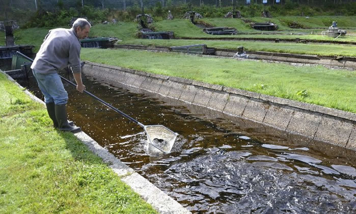 پرورش ماهیهای سردآبی از توانمندیهای شهرستان سوادکوه است