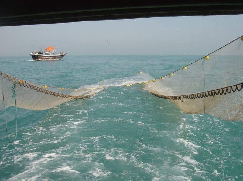 صید غیراصولی آبزیان خلیج فارس را تهدید میکند/ لزوم همکاری تعاونی های صیادی استان
