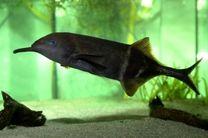 گونه ای از ماهی که مثل انسان فکر می کند