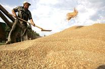 صادرات گندم و فرآوردهای آن افزایش مییابد