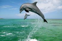 کشف گونه جدیدی از دلفین پس از ۶۵ سال + تصویر