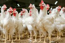 واردات مرغ و تخم مرغ از ایران به آذربایجان ممنوع شد