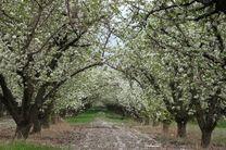 باغ سیب کرج برای همیشه سبز باقی میماند