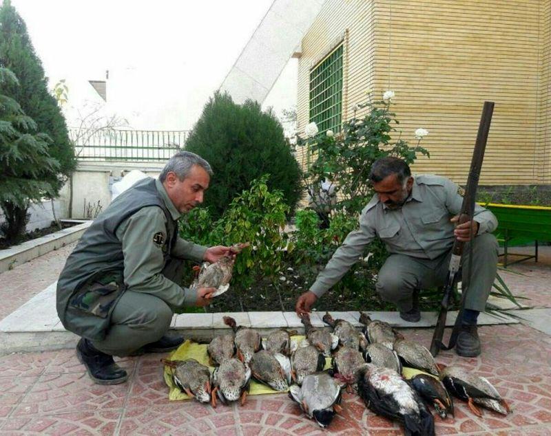 شکارچی متخلفی که ۱۷ قطعه مرغابی سرسبز شکار کرده بود دستگیر شد