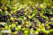 واردات زیتون ممنوع است/ روغن زیتون مورد نیاز کشور حدود 10 هزار تن در سال