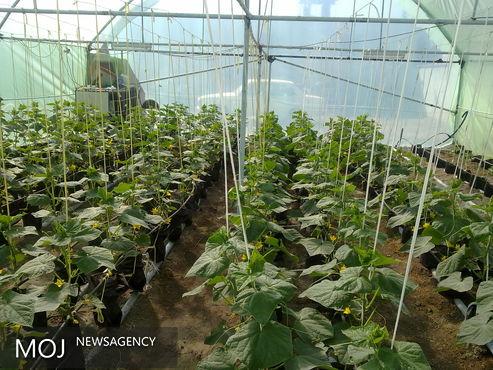 گسترش کشت گلخانهای از اولویت های جهاد کشاورزی ورامین