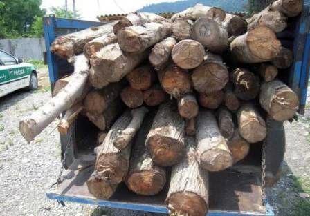 کشف و جمع آوری ۸۰ تن چوب بلوط قاچاق