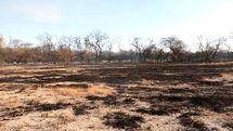 نگاهی به چرایی دود شدن جنگلهای محور بندرعباس-میناب
