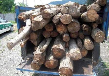 3 تن چوب بلوط قاچاق در نجف آباد کشف شد