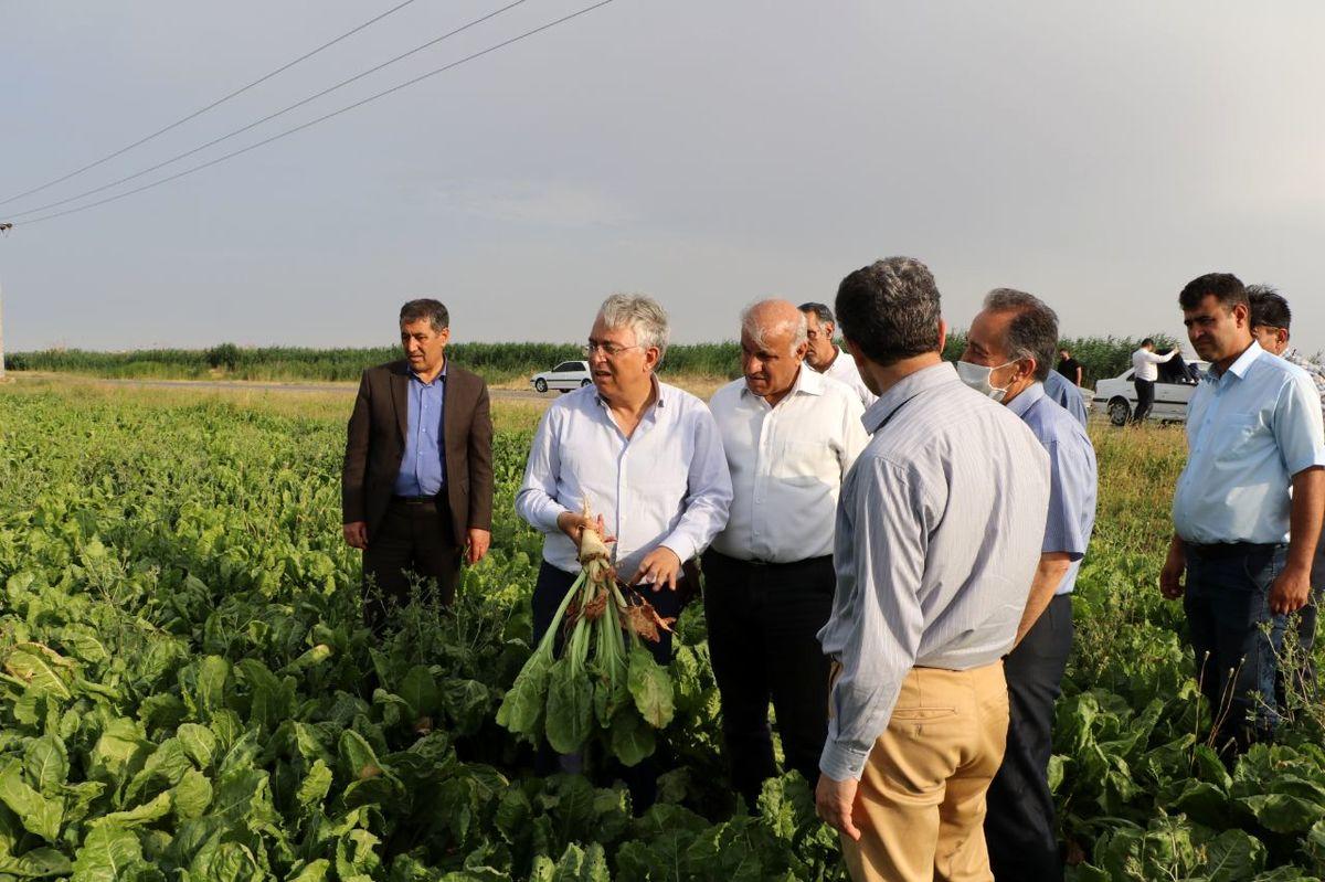 آخرین وضعیت اراضی نگین کشاورزی ایران از زبان مدیرعامل