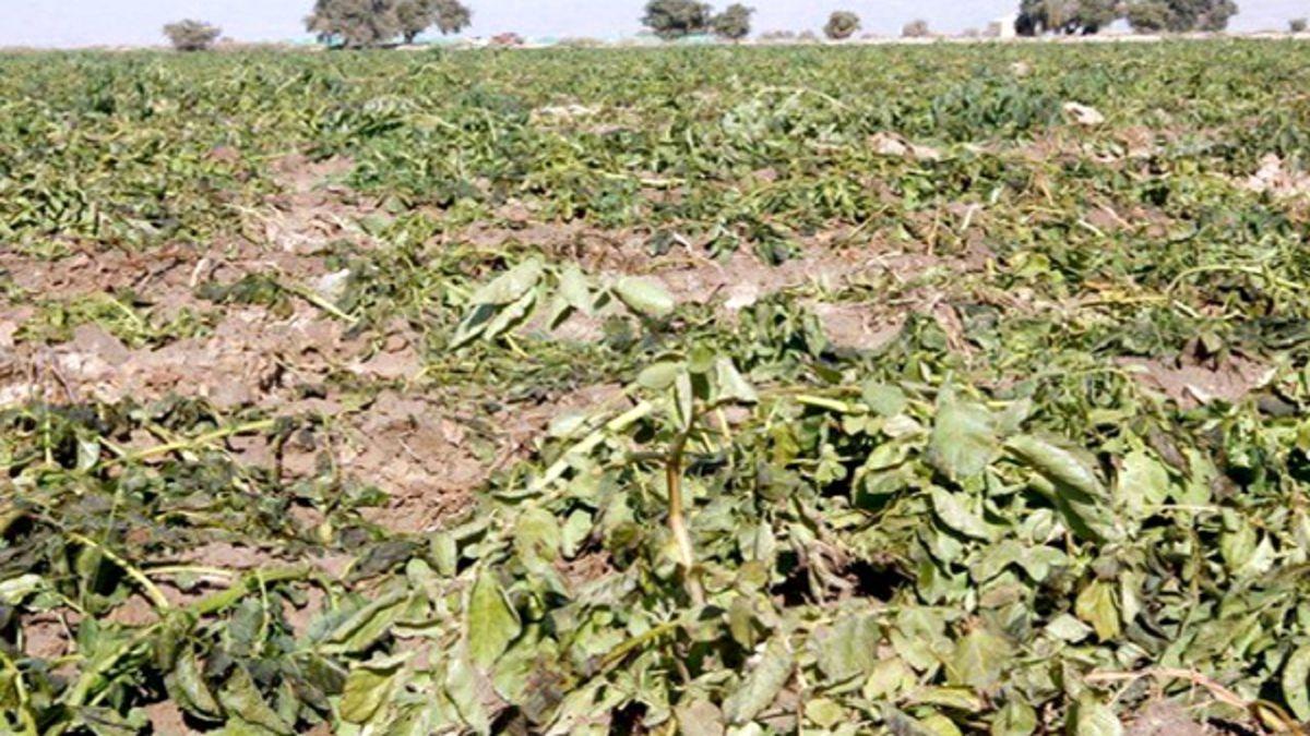 مطالبه حل مشکل آب شرب و کشاورزی شهرستانهای حوزه هلیلرود و جازموریان در کارزار