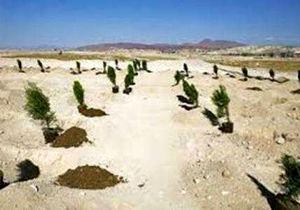 4136هکتار نهالکاری در استان اصفهان انجام میشود