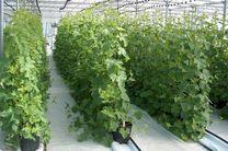 حمایت از توسعه طرحهای گلخانهای درهرمزگان