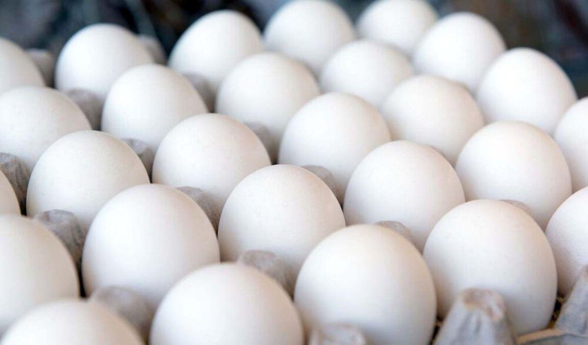 هشدار تولید کنندگان تخم مرغ نسبت به افزایش قیمت ها