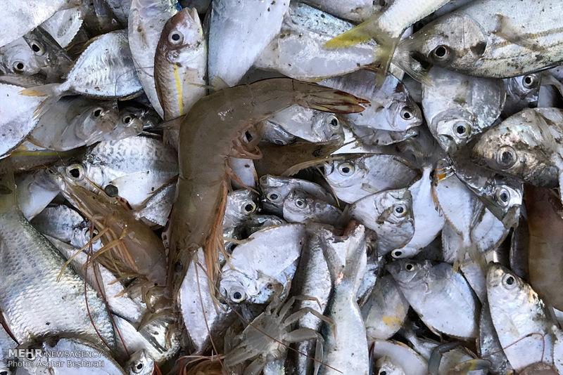 کشف بیش از ۲ هزار کیلوگرم ماهی قاچاق در جزیره قشم