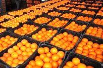 واردات دولتی ۲۵ هزار تن پرتقال از مصر برای شب عید