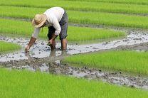 24 هکتار از زمین های بایر محمودآباد به چرخه تولید بازگشت
