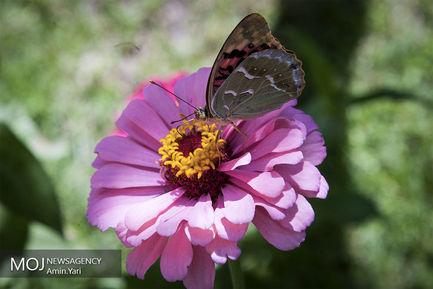 +گلهای+تابستانه (1)