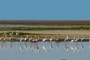 ورود بیش از 4 میلیون متر مکعب آب به تالاب  بین المللی گاوخونی