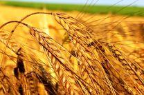 سالانه یک میلیون تن به محصولات کشاورزی اردبیل افزوده می شود