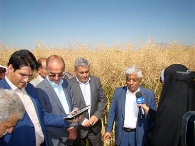 کرمانشاه از استانهای موفق در اجرای برنامه کشت کلزا در کشور است