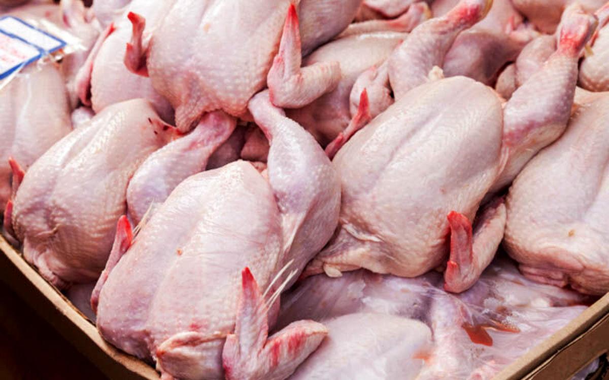 توزیع 12 تن مرغ گرم در شهرستان کاشان