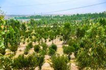 ملیات اجرایی بوستان جنگلی رﺿﻮان به مساحت ۴۰۰ هزار مترمربع آغاز میشود