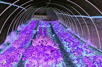 370 هکتار از اراضی کشاورزی استان زیر کشت محصولات گلخانهای می رود