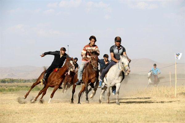 درخشش سوارکار قمی در رقابت های کشوری اسب ایرانی