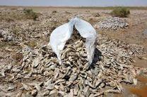 5 تن ماهی غیرقابل مصرف در سیریک معدوم شد