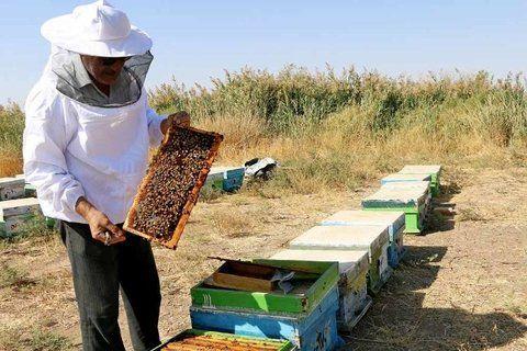 فعالیت حدود ۴۵۰ زنبوردار بومی در شهرستان سیاهکل