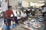 فروش سی تن از انواع ماهی در بازار گورزانگ میناب