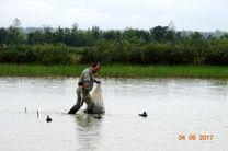 ورود نخستین گروه از پرندگان مهاجر به شفت