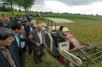 نخستین برداشت مکانیزه برنج در مازندران انجام شد