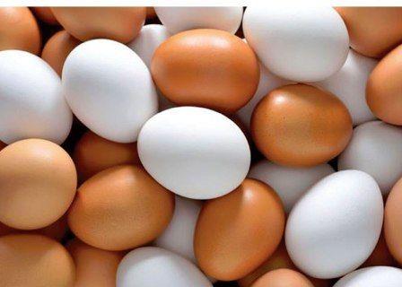 قیمت تخممرغ دوباره در مازندران افزایش یافت