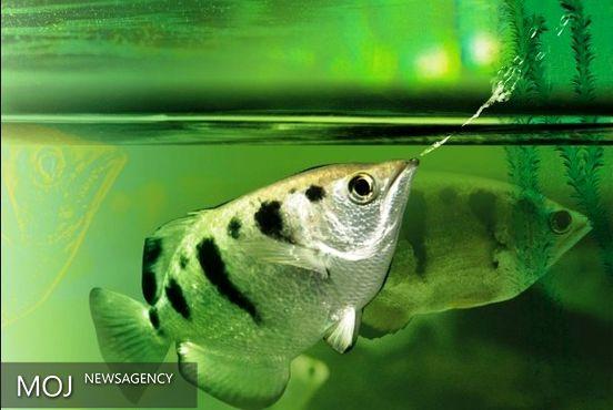 نوعی ماهی چهره ها را تشخیص میدهد