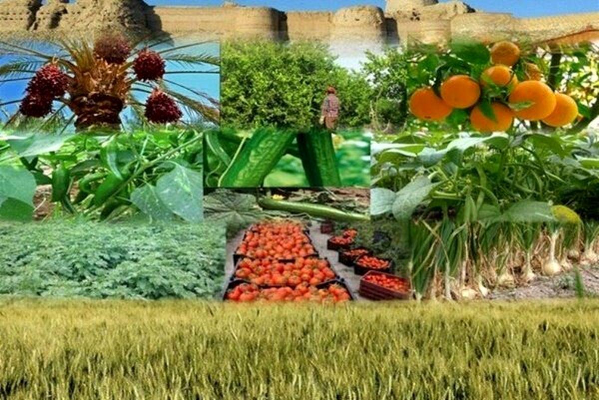 افزایش جذب ماده خام کشاورزی در صنایع تبدیلی استان یزد