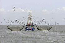 مقابله با صید ترال در هرمزگان/ اجازه نمی دهیم عده ای دریا را شخم بزنند